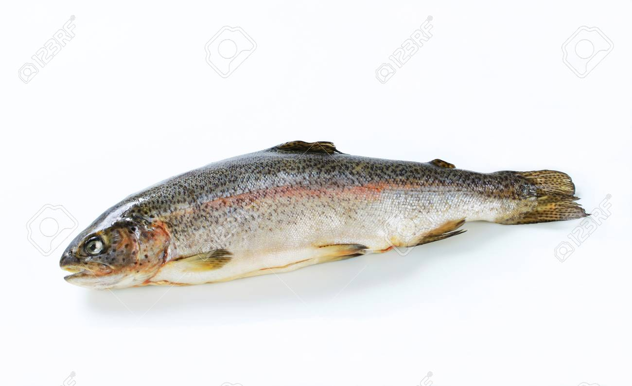 Studio shot of fresh trout Stock Photo - 13564418