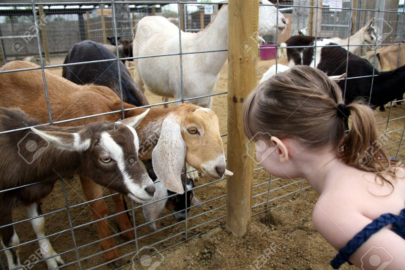 Child Talking to Billy Goats Stock Photo - 395745