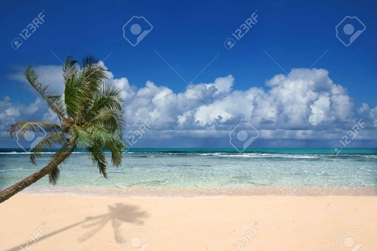 Palm Tree Overlooking Pristine Beach in Hawaii Stock Photo - 3947712