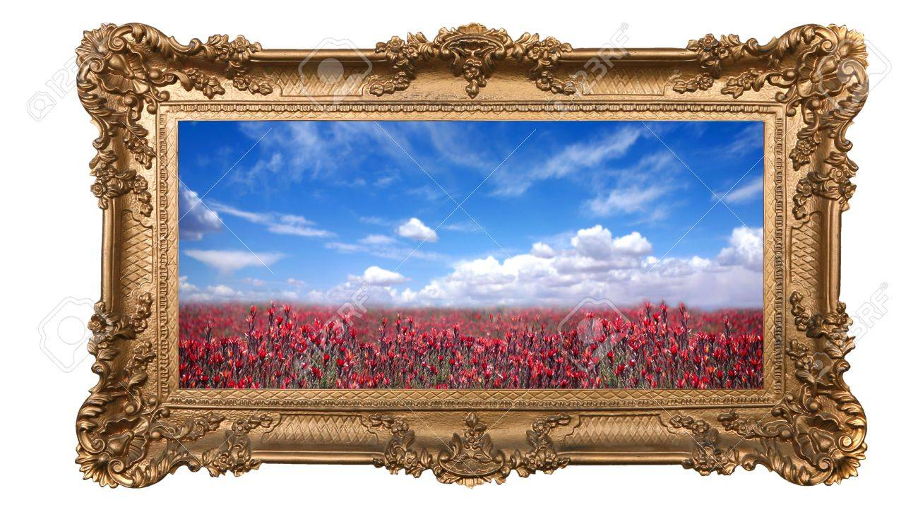 Field of Pretty Red Flowers and Beautiful Sky With High Depth of Field in a  Golden