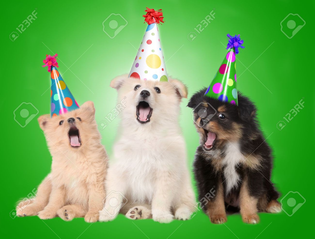 Funny Singing Birthday Celebrating Puppy Dogs Wearing Party Hats Stock Photo