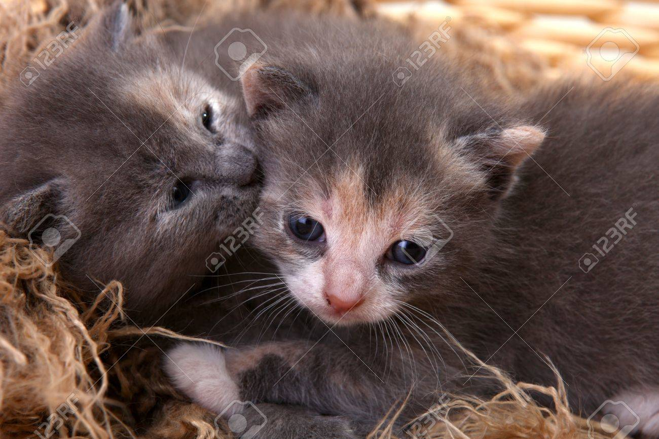 Adorable Cute Newborn Baby Kittens Stock Picture And