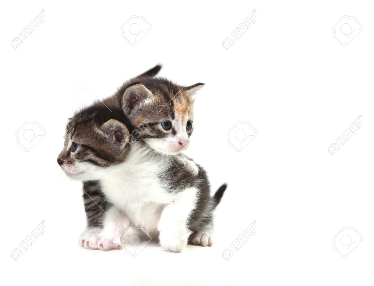 adorable cute kittens on white background stock photo picture and