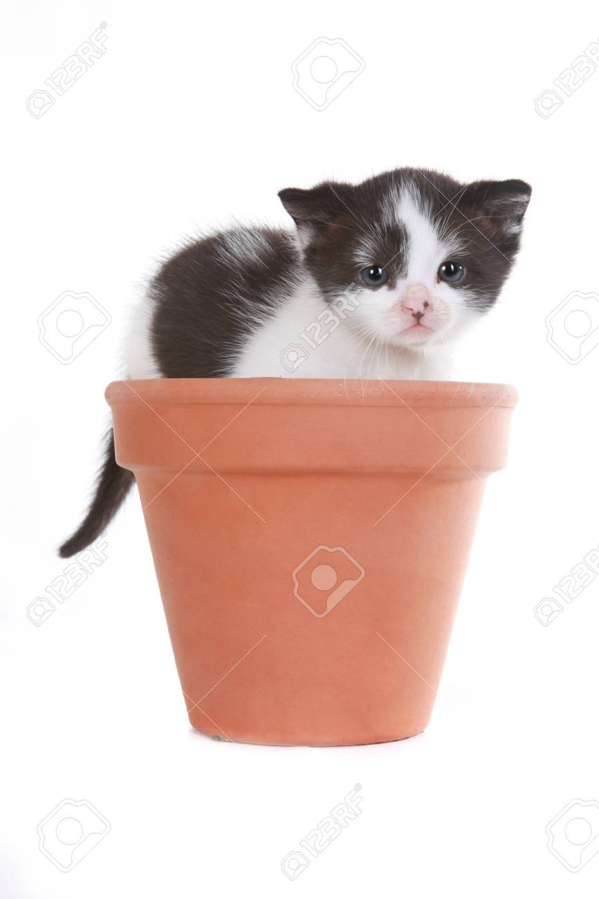 Cute Little Kitten Portrait in Studio on White Background Stock Photo - 15157592