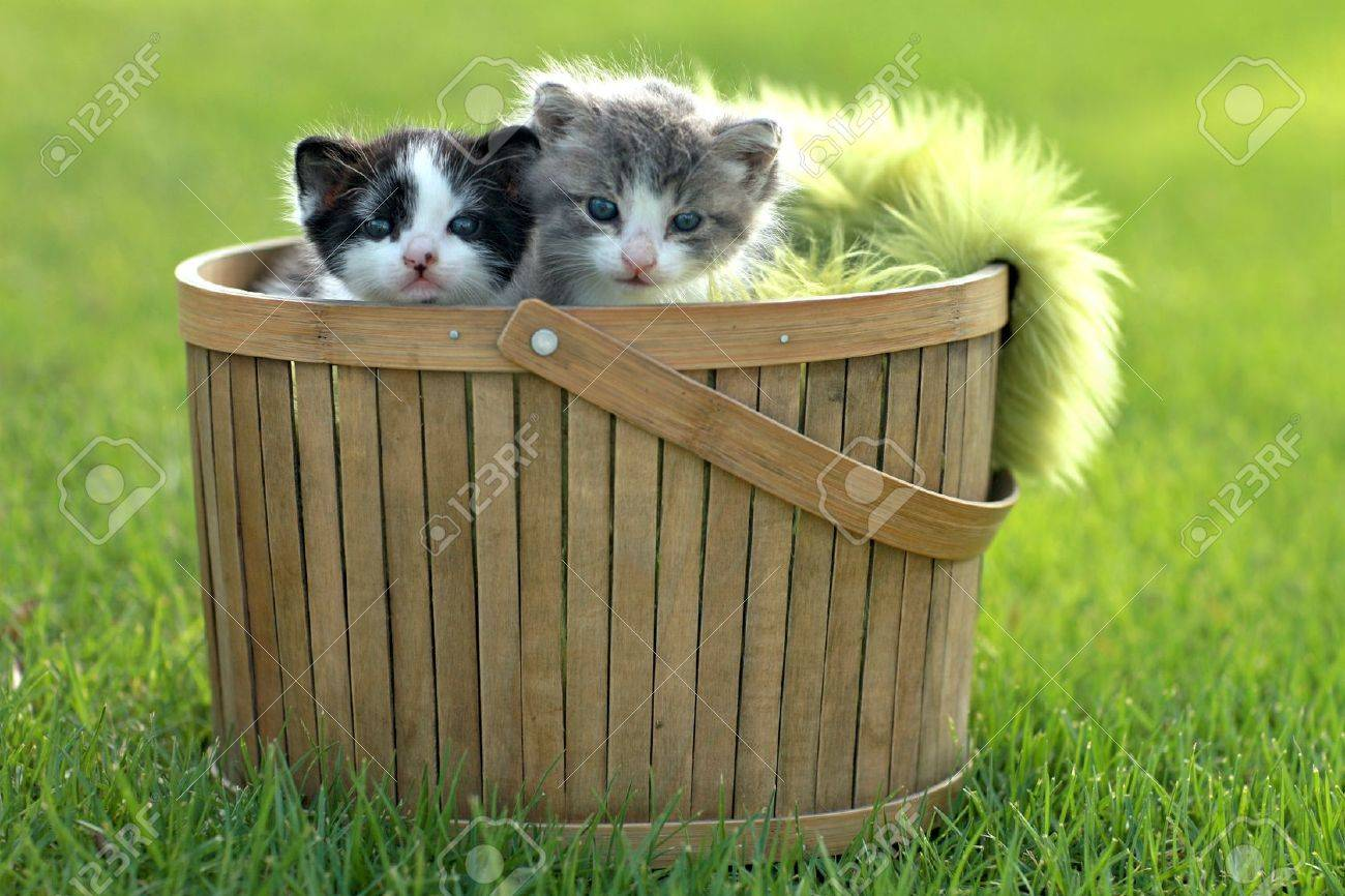 Cute Little Kittens Outdoors in Natural Light Stock Photo - 15162545
