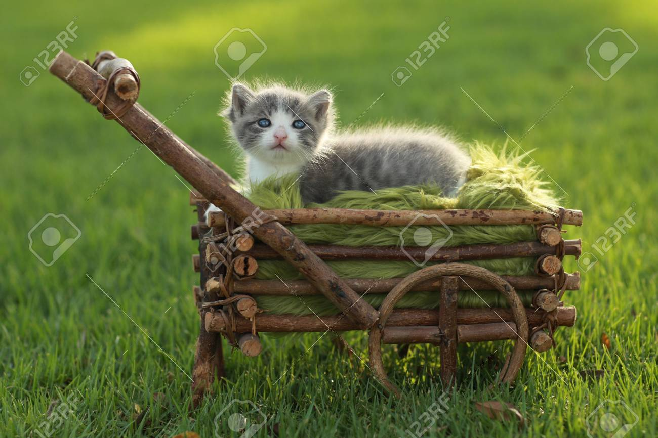 Adorable Baby Kitten Outdoors in Grass Stock Photo - 15162398