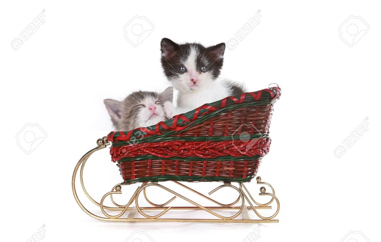 Cute Kittens in a Santa Christmas Sleigh on White Stock Photo - 19485706
