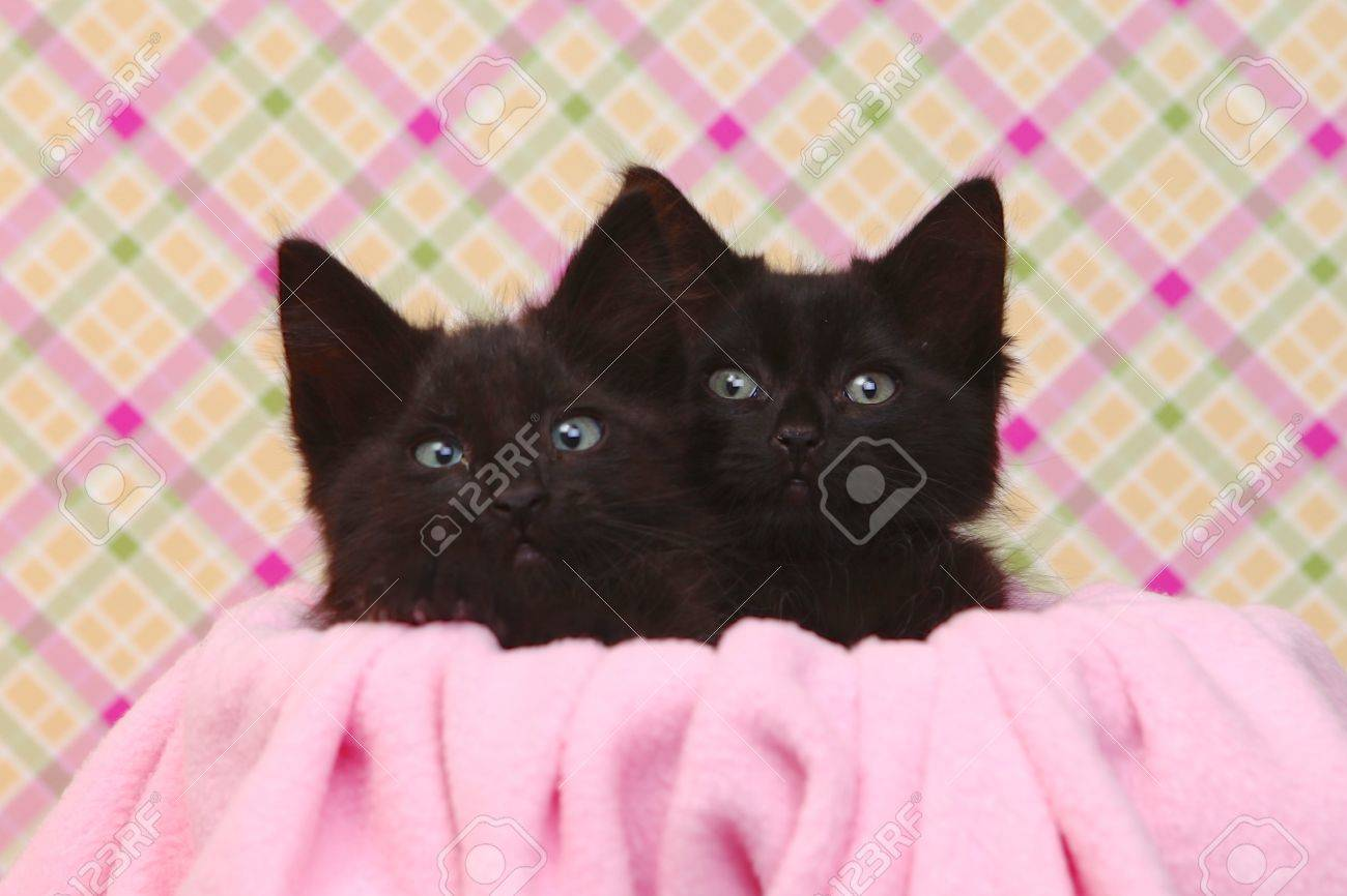 Two Cute Black Kittens On Pink Pretty Background Stock Photo Picture And Royalty Free Image Image 20332779