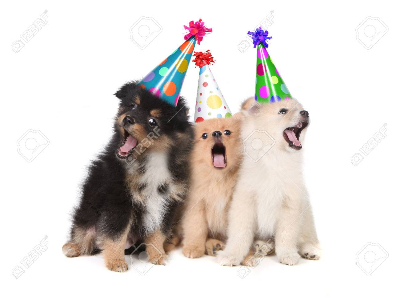 Humorous Puppies Singing the Happy Birthday Song Wearing Silly