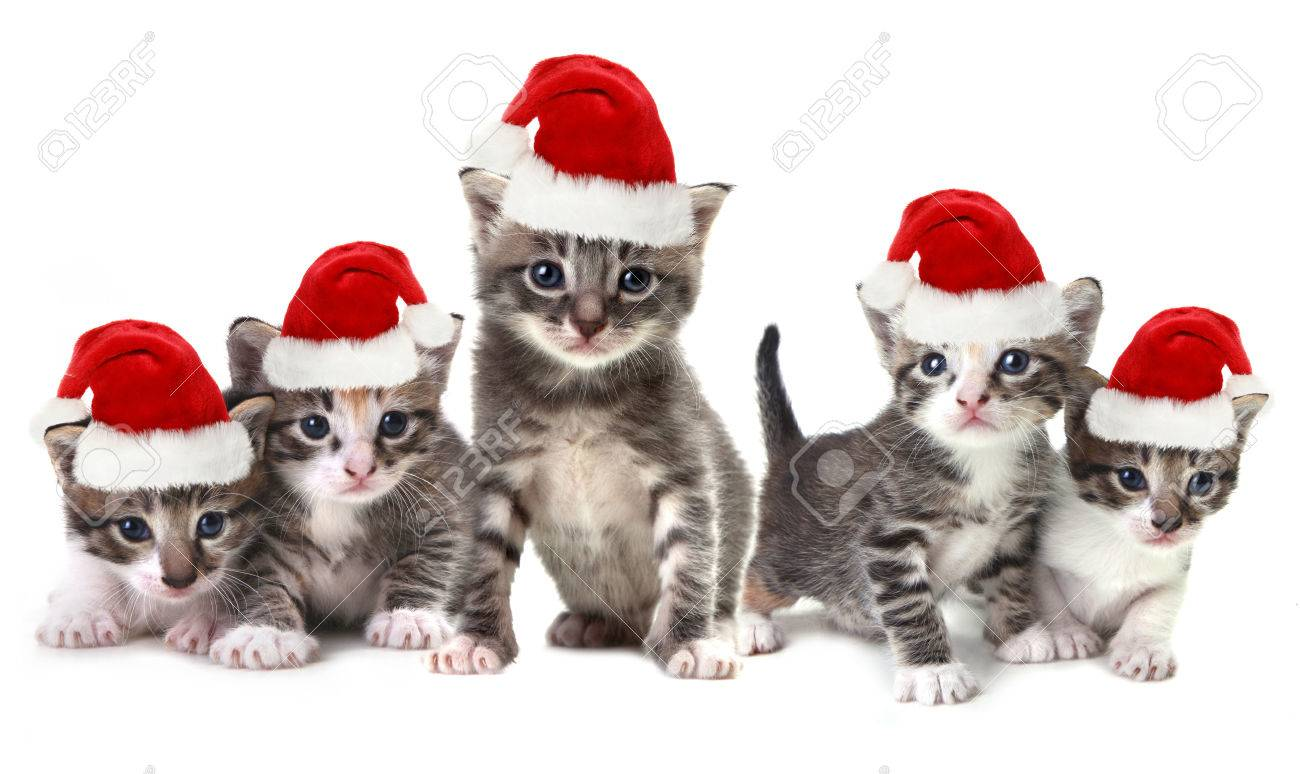 Adorable Christmas Kittens Wearing Red Hat on White
