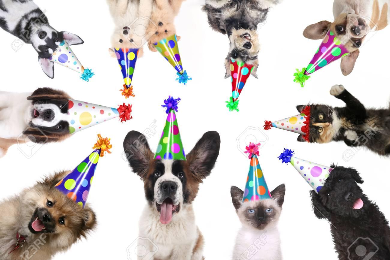 Mehrere Tier Tiere Isoliert Tragen Geburtstag Hüte Für Eine Party