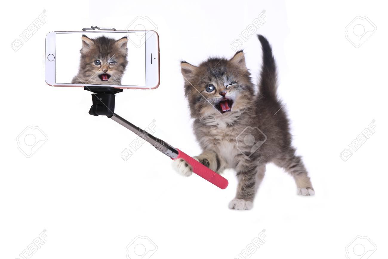 Selfie Kitten LeBow nudes (49 photos), Tits, Paparazzi, Instagram, cleavage 2006