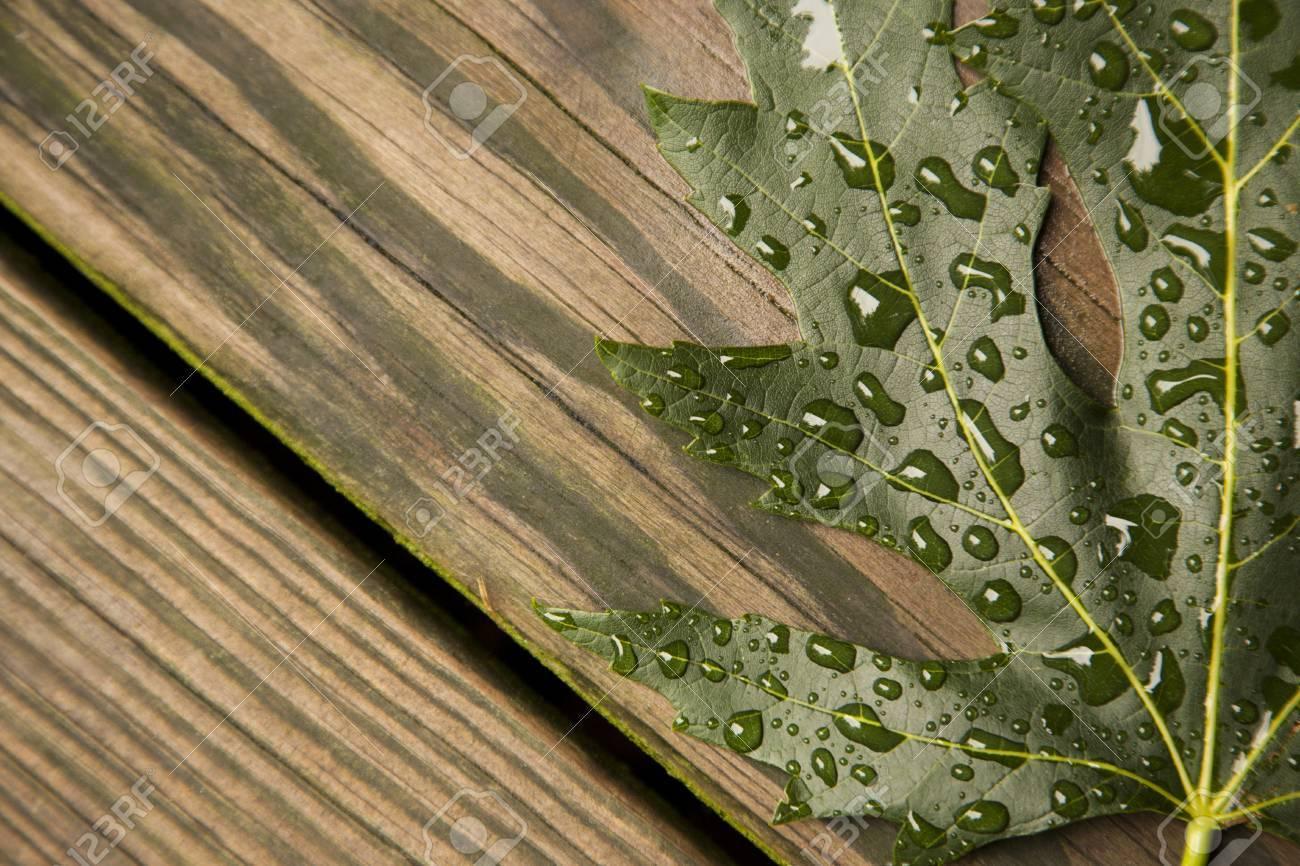 Une Seule Feuille D Erable Verte Tombe Sur Une Planche De Bois