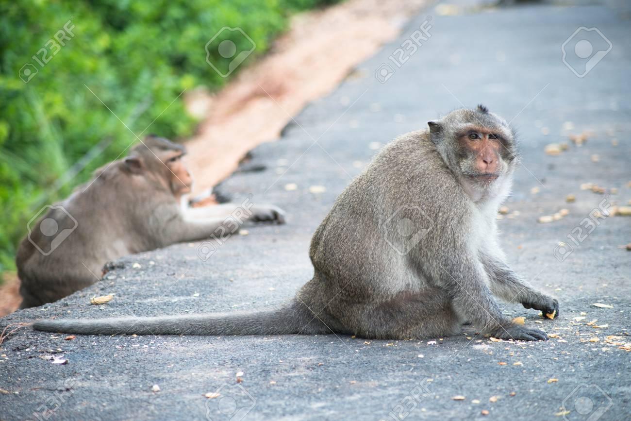 Beeindruckend Haustier Affe Dekoration Von Ein Sitzt Auf Der Straße Standard-bild -