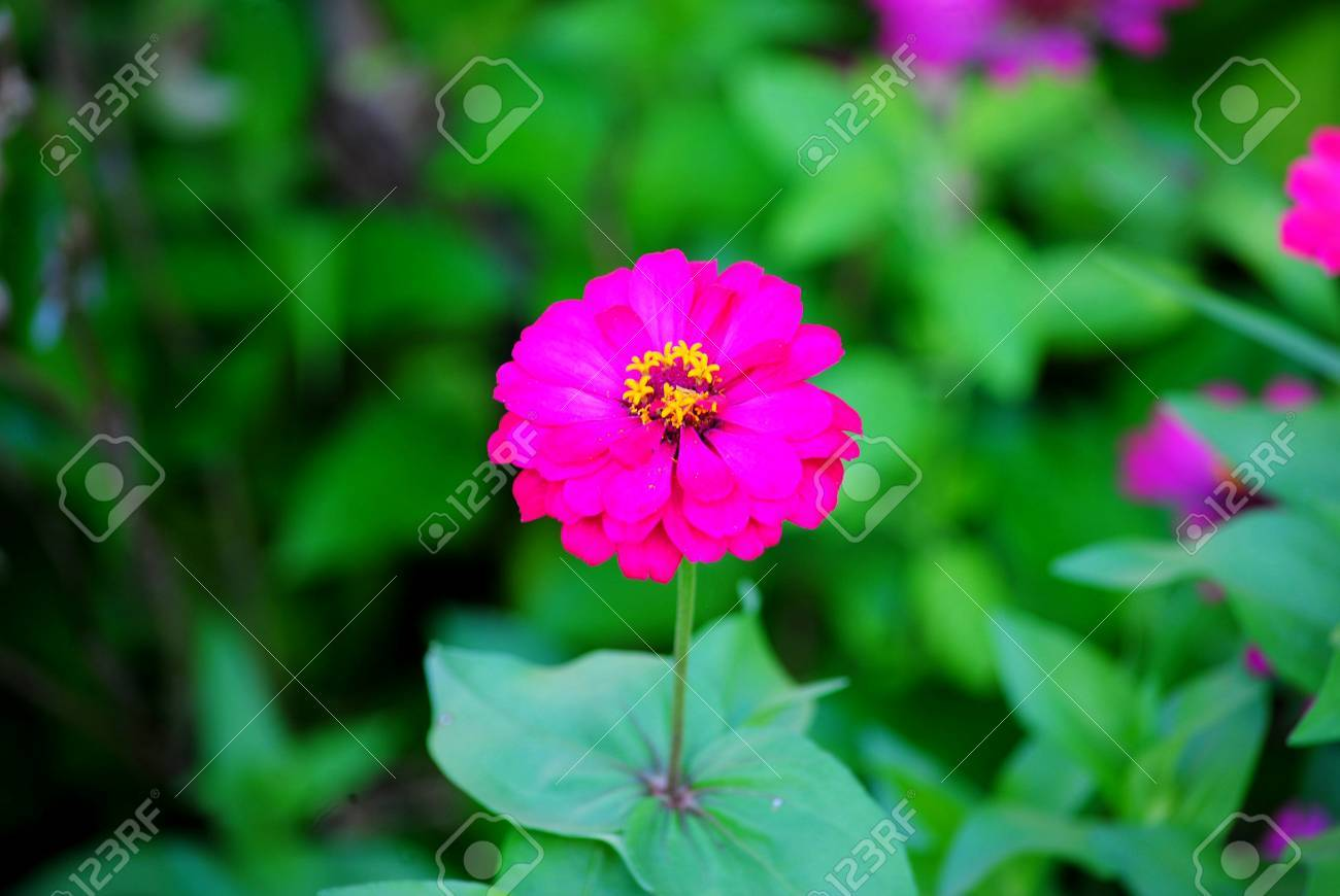 Beautiful flowers of all kinds are different stock photo picture beautiful flowers of all kinds are different stock photo 31174035 izmirmasajfo