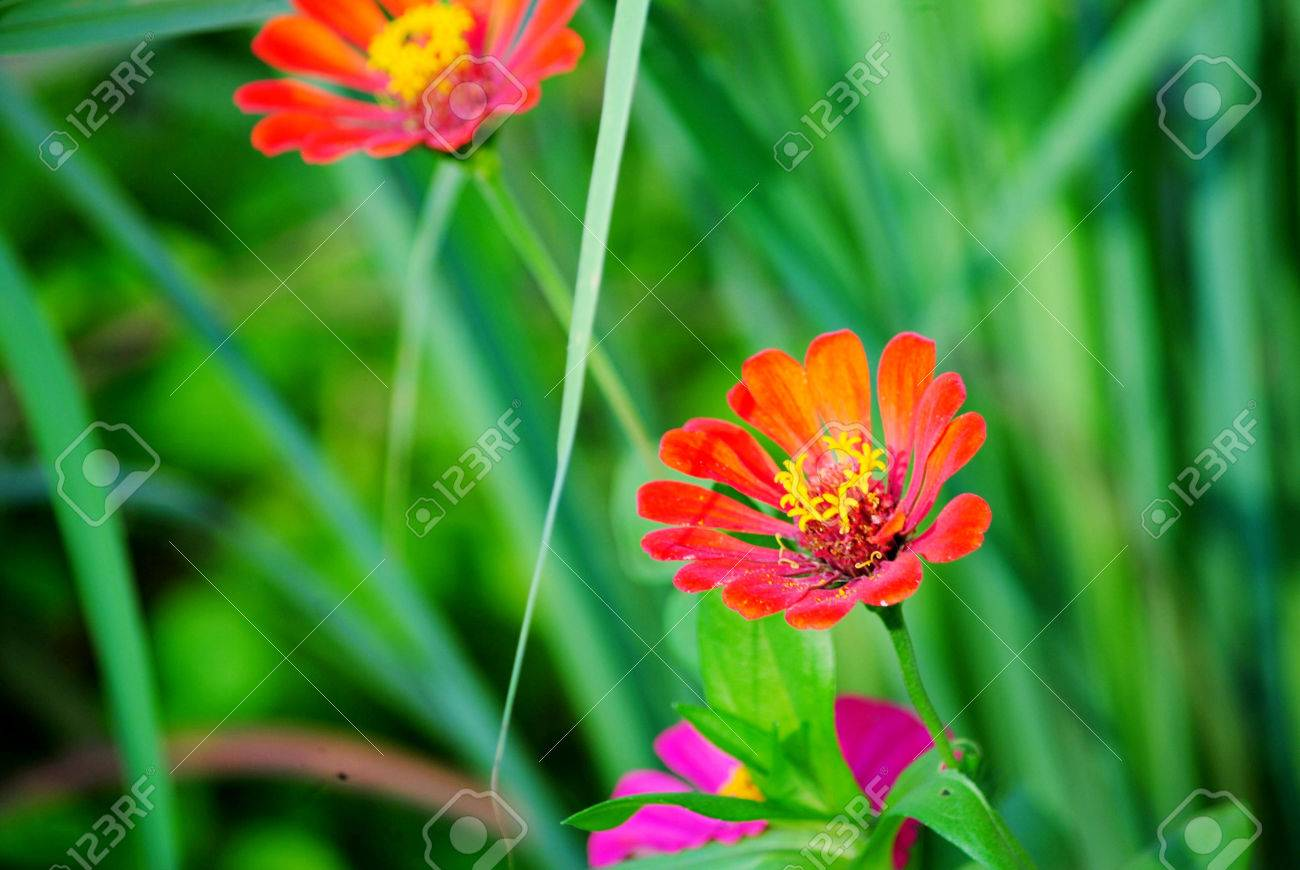 Beautiful flowers of all kinds are different stock photo picture beautiful flowers of all kinds are different stock photo 31174058 izmirmasajfo