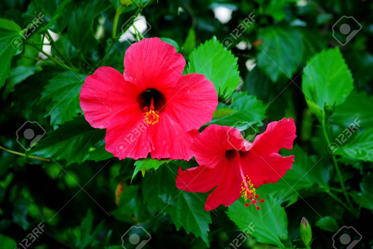 Beautiful flowers of all kinds are different stock photo picture beautiful flowers of all kinds are different stock photo 31248579 izmirmasajfo