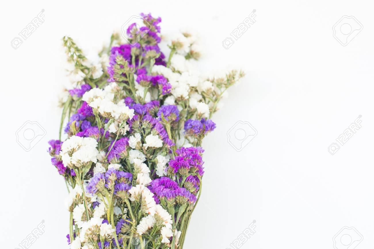 スターチス増殖スターチス セーラム花 の写真素材画像素材 Image 66302531