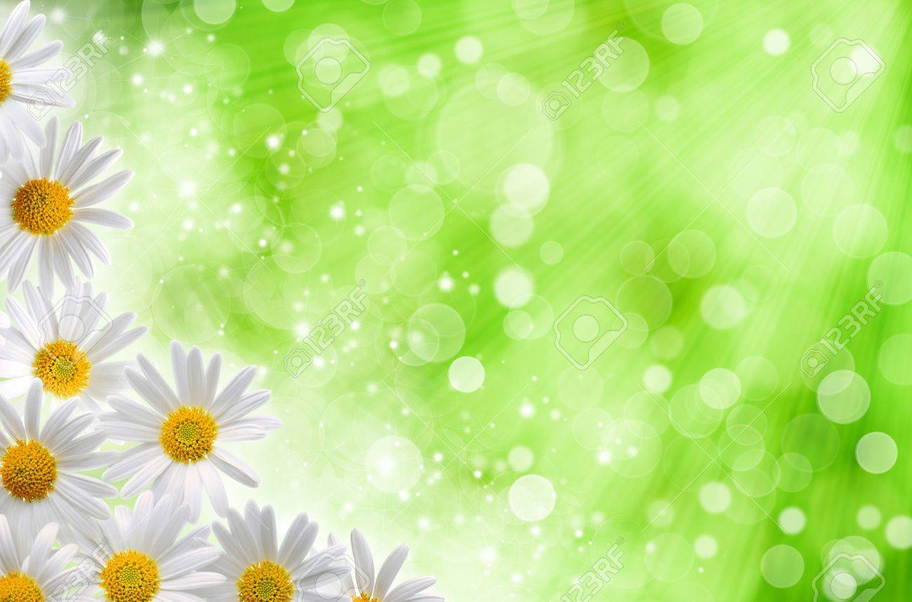 Abstract Spring Backgrounds With Daisy Flowers And Blured Bokeh Stock Photo