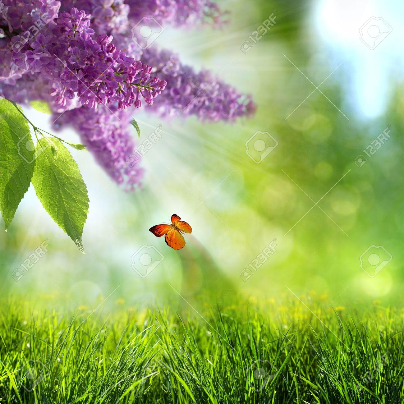 Immagini Stock Sfondi Astratti Estate Lillà Con Fiori E Farfalle