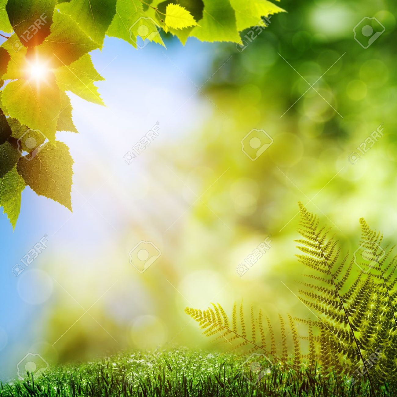 In the forest. Natural backgrounds with fern foliage Stock Photo - 14717562