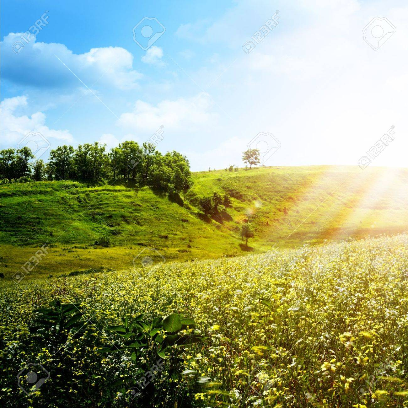 bright summer afternoon abstract natural backgrounds stock photo