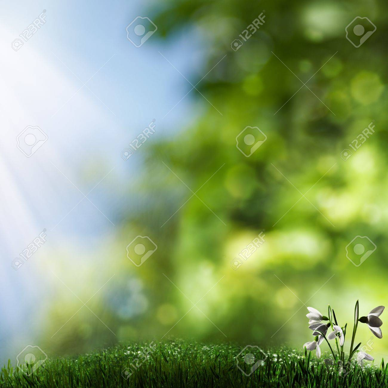 Misty natural backgrounds with grass and beauty flowers Stock Photo - 15071182