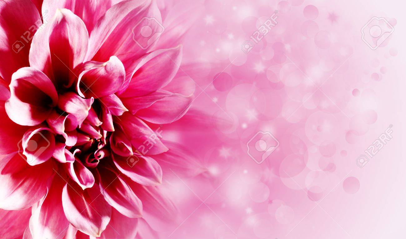 Beautiful Lotus Flower Backgrounds For Your Design Stock Photo
