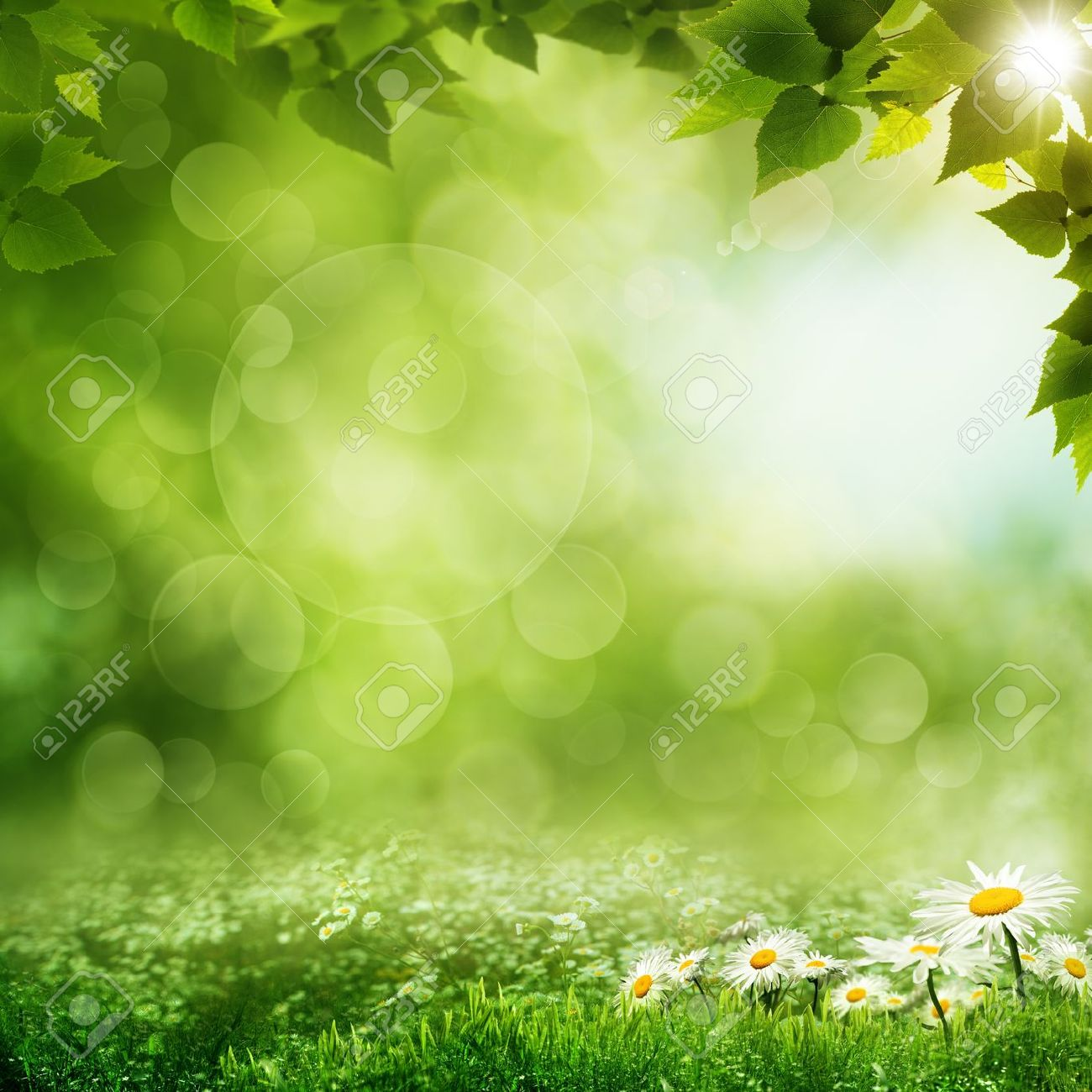Beauty morning in the green forest, eco backgrounds - 19115745