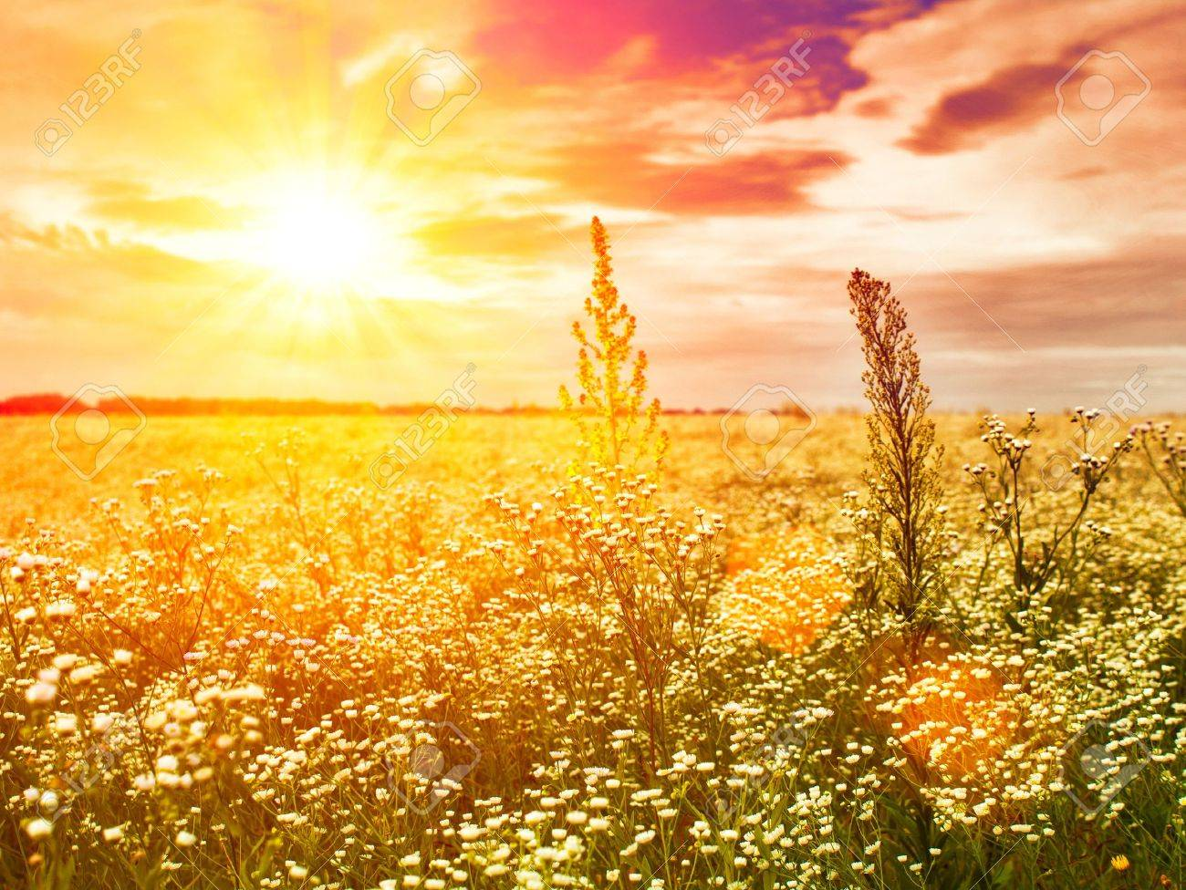 late sunset on the summer meadow, natural landscape - 21087314