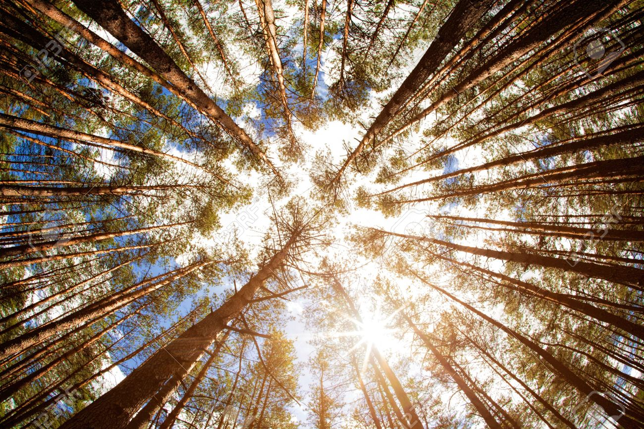 Looking up, summer backgrounds for your design - 21370692
