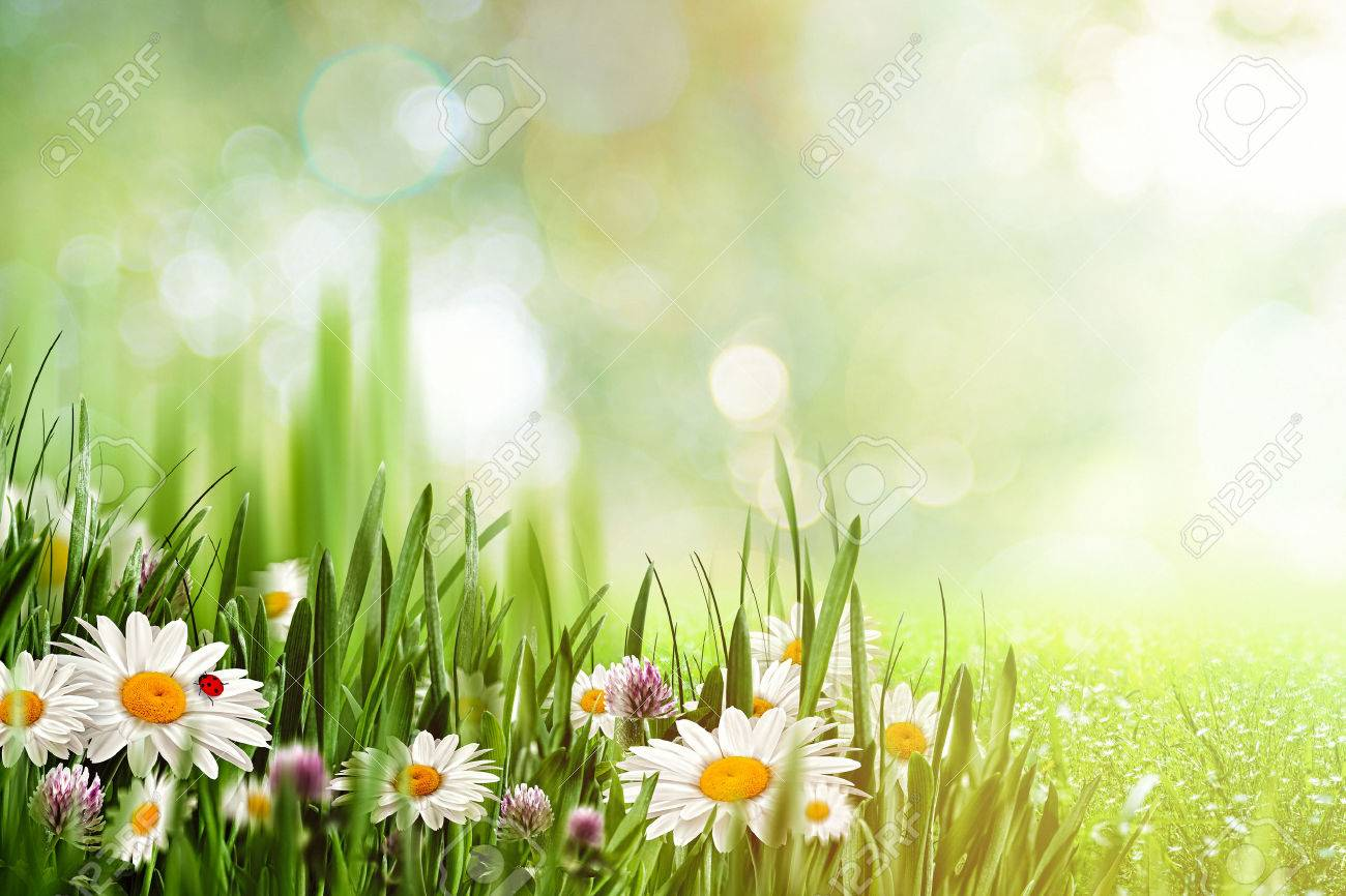 Beauty natural backgrounds with chamomile flowers for your design beauty natural backgrounds with chamomile flowers for your design stok fotoraf 51925108 izmirmasajfo