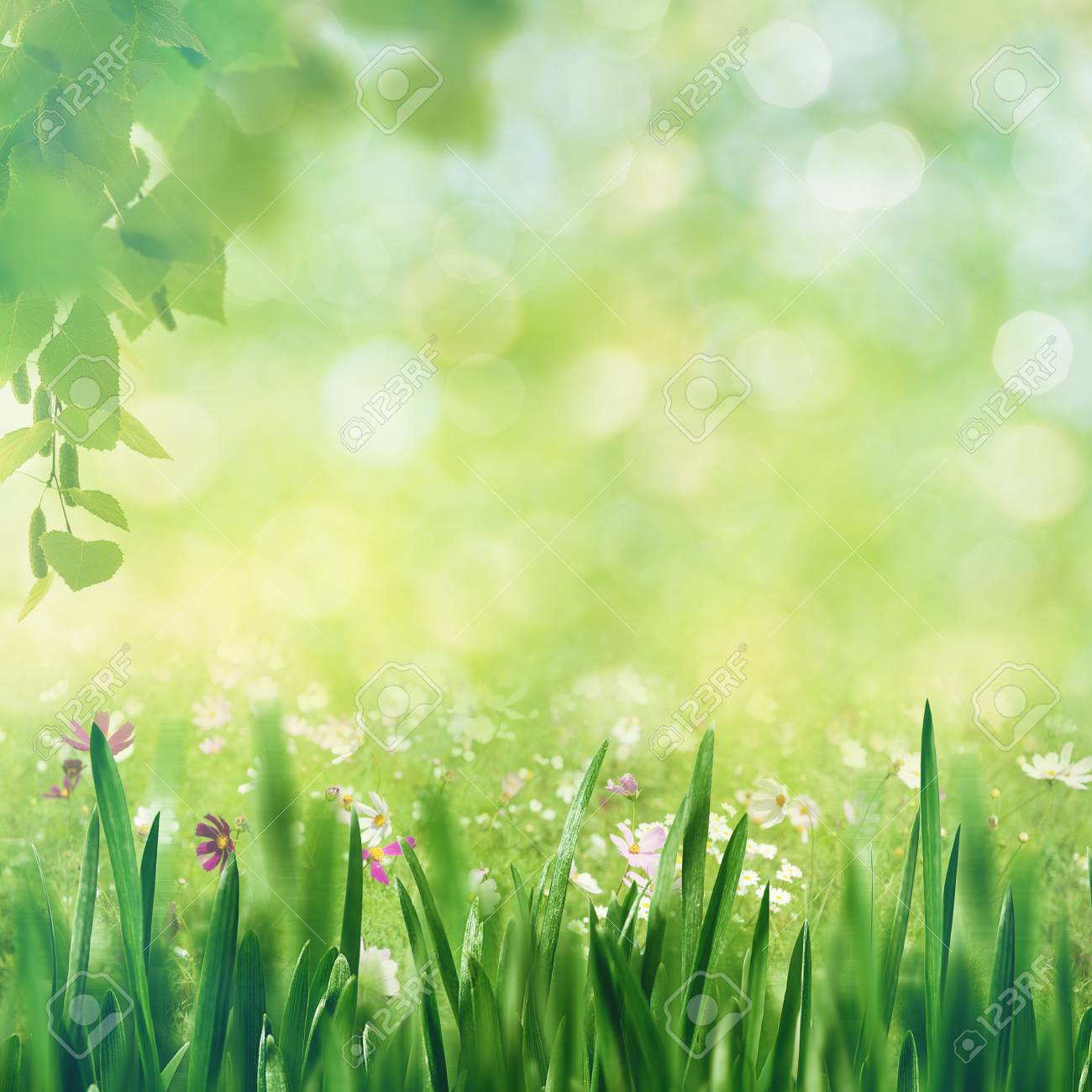Beech Fores Abstract Spring Backgrounds With Tree And Green Grass Stock Photo