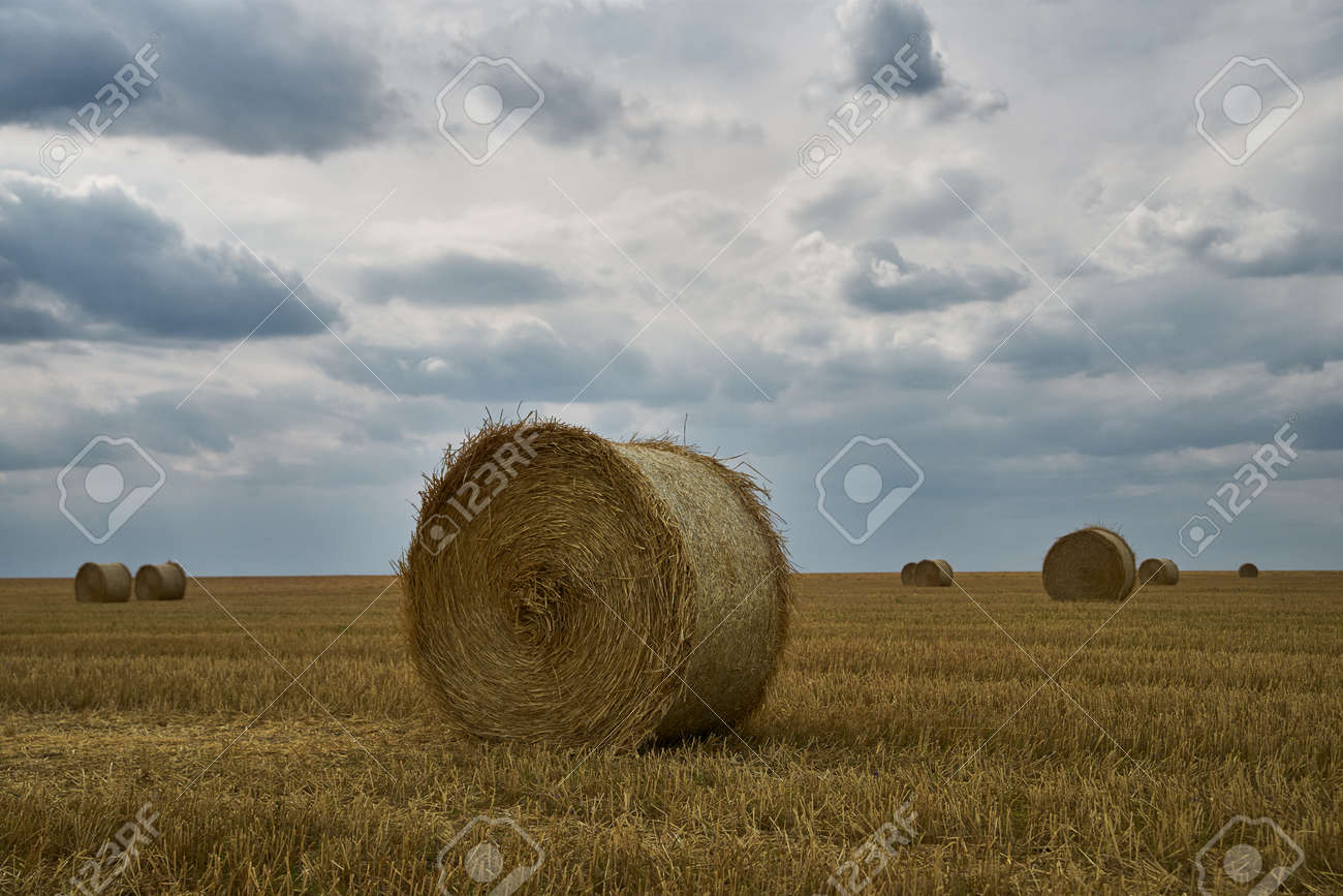Summer Harvesting on the field. Agricultural seasonal backgrounds - 159256693