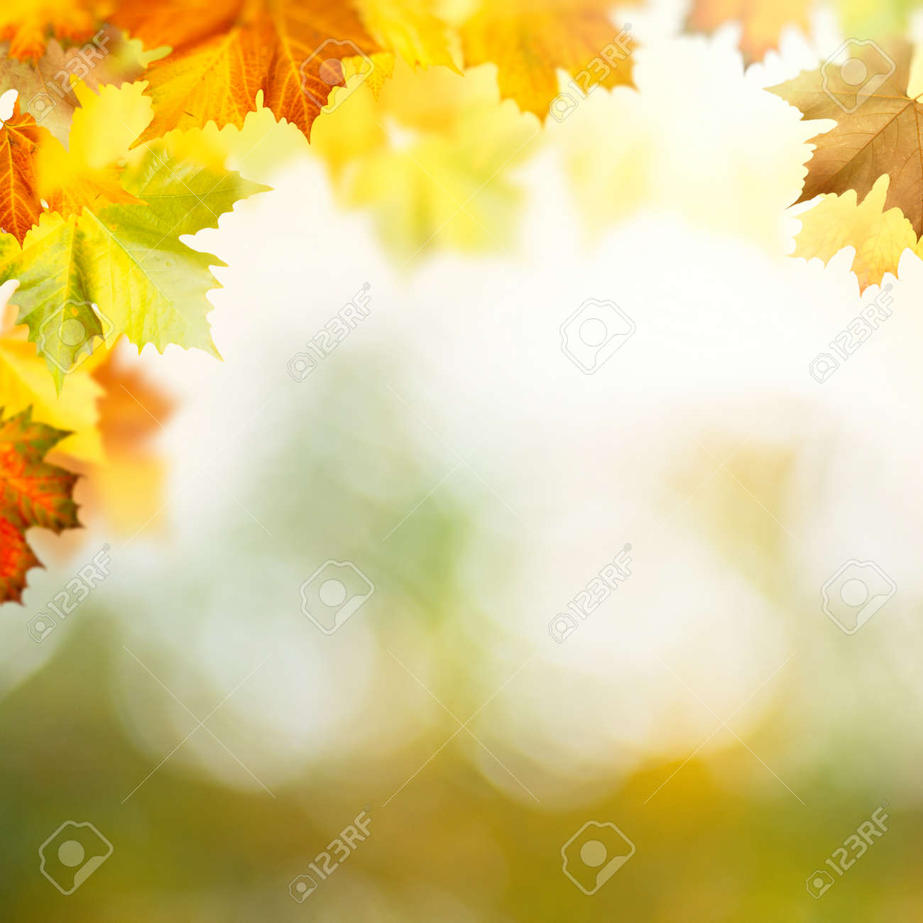 Wonderful autumn day in the forest. Abstract natural backgrounds - 159256720