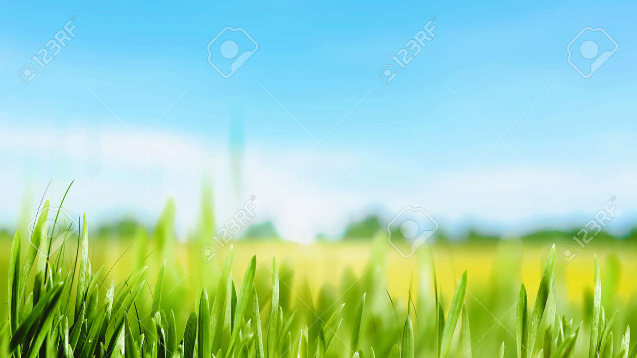 Peaceful summer meadow. Beautiful natural backgrounds - 159256881