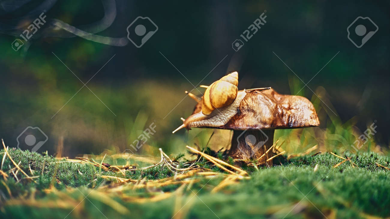 Beautiful autumn in the deep forest. Alone snail on the mushroom - 159256889