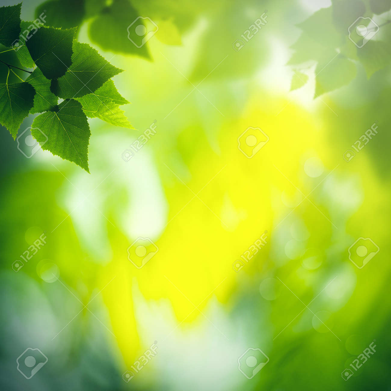 Green birch foliage with defocused background, Abstract seasonal wallpapers - 159256902