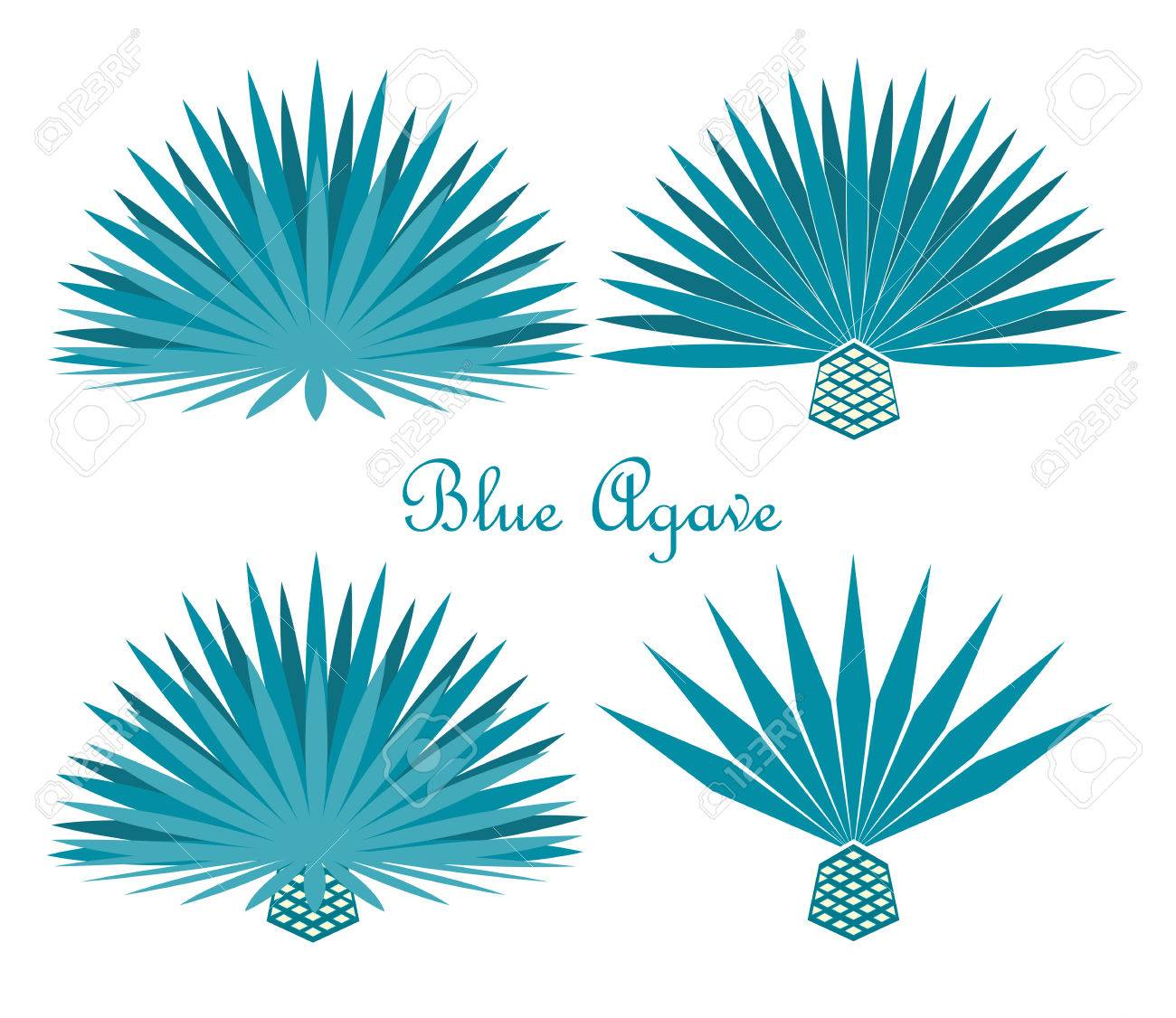 Blue Agave Or Tequila Agave Plant Royalty Free Cliparts Vectors