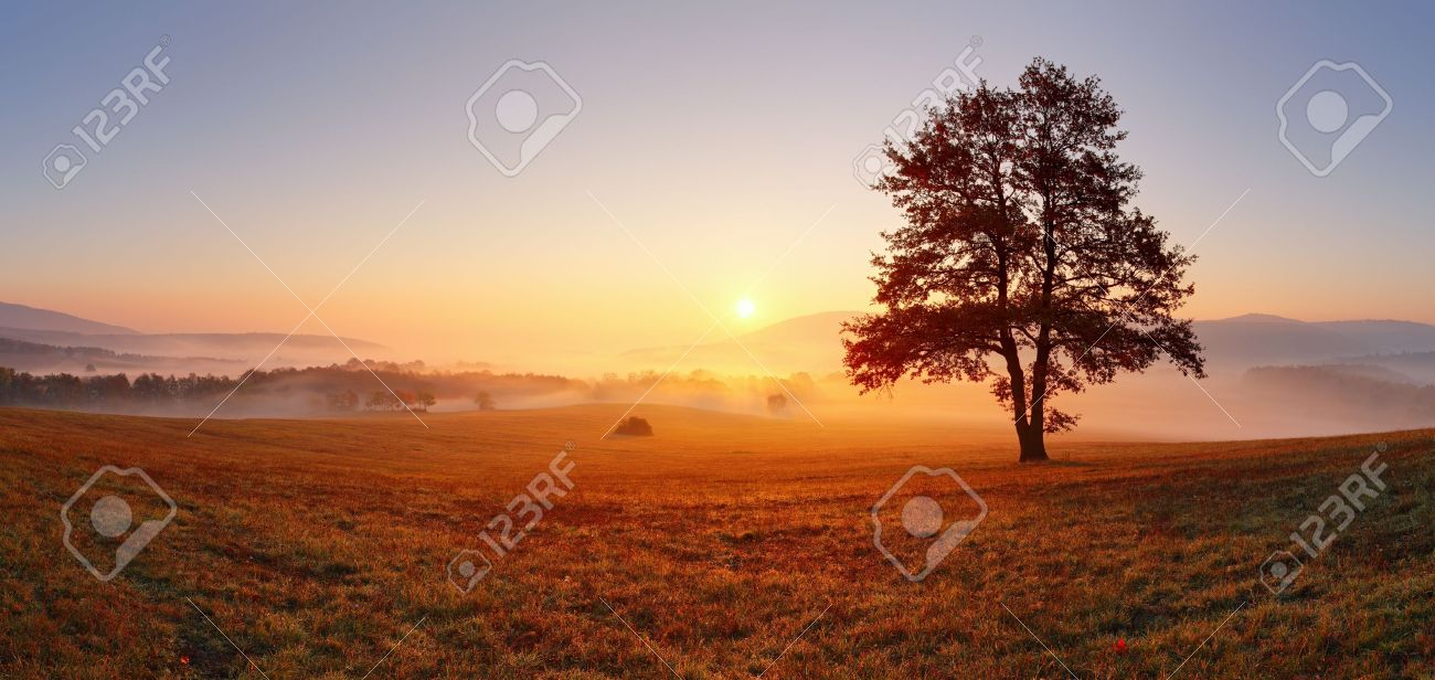 Alone tree on meadow at sunset with sun and mist - panorama Stock Photo - 16078265