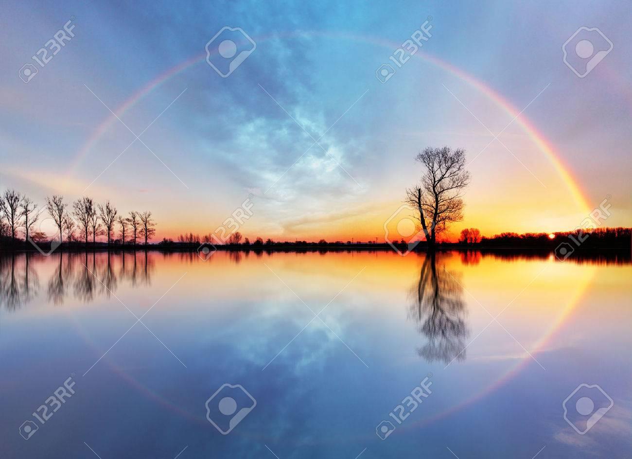Tree and sun on lake sunrise - 48292982