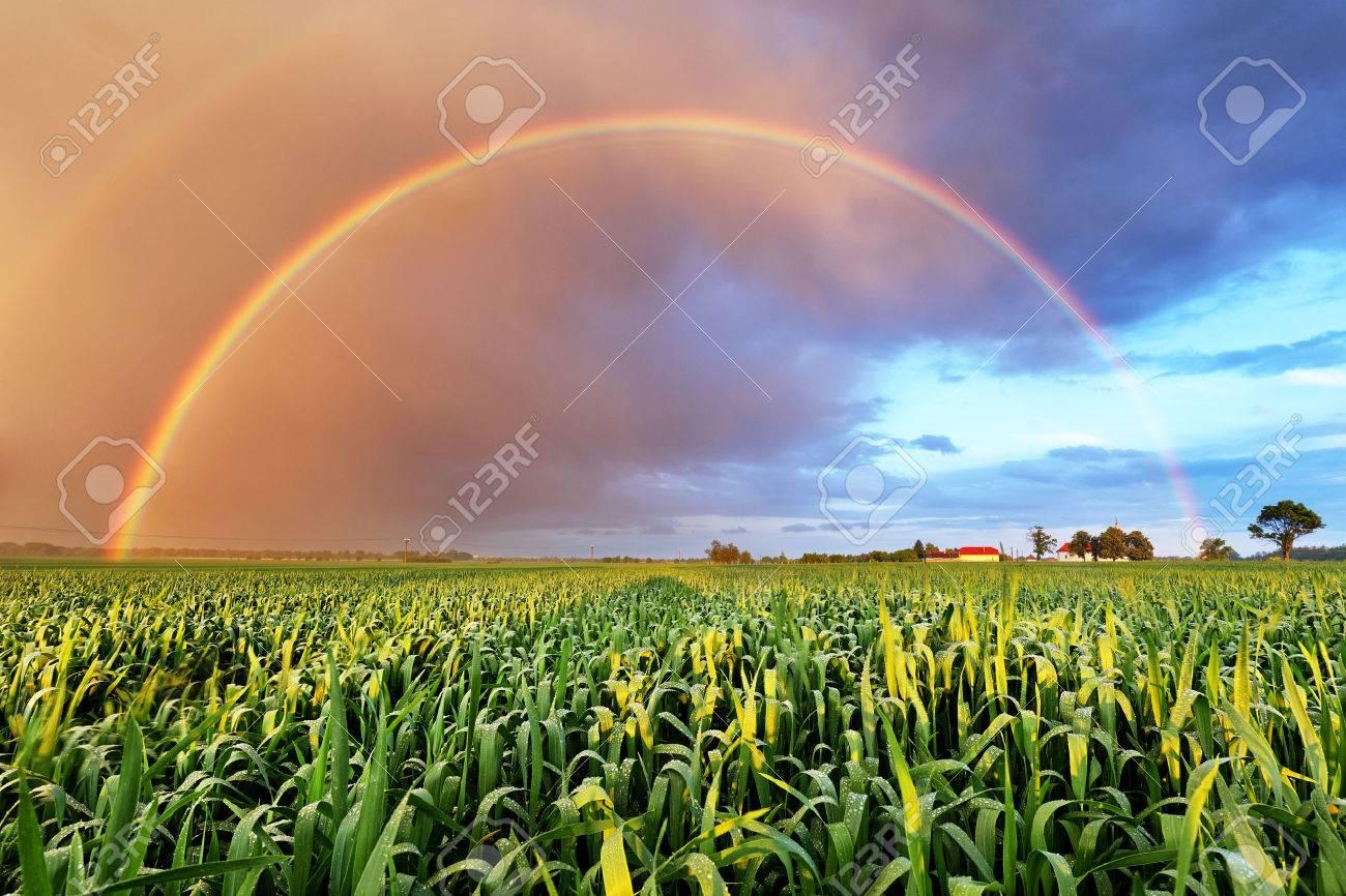 Rainbow over wheat field, nature landscape - 57029948