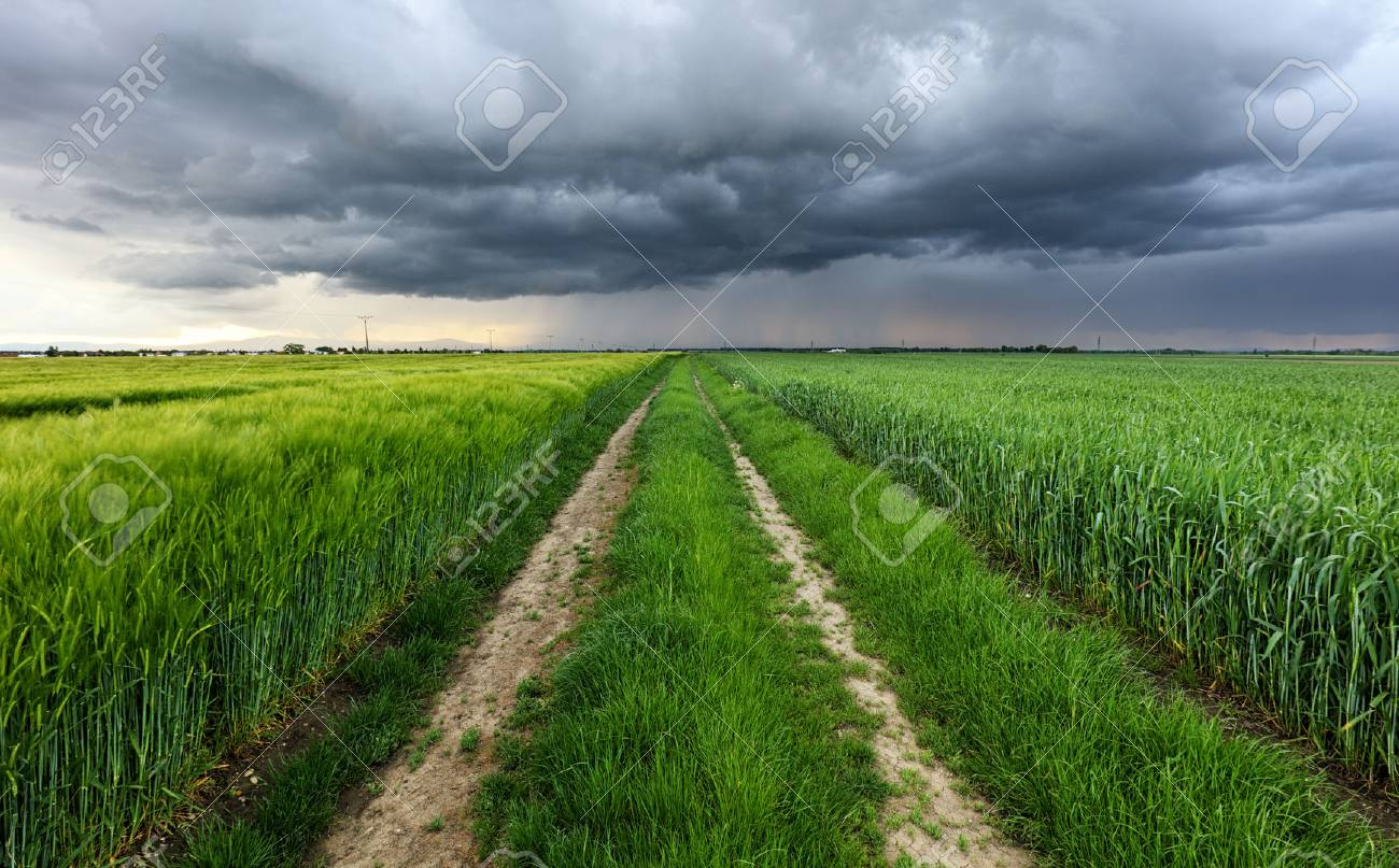 Storm clouds over field and road - 59624917