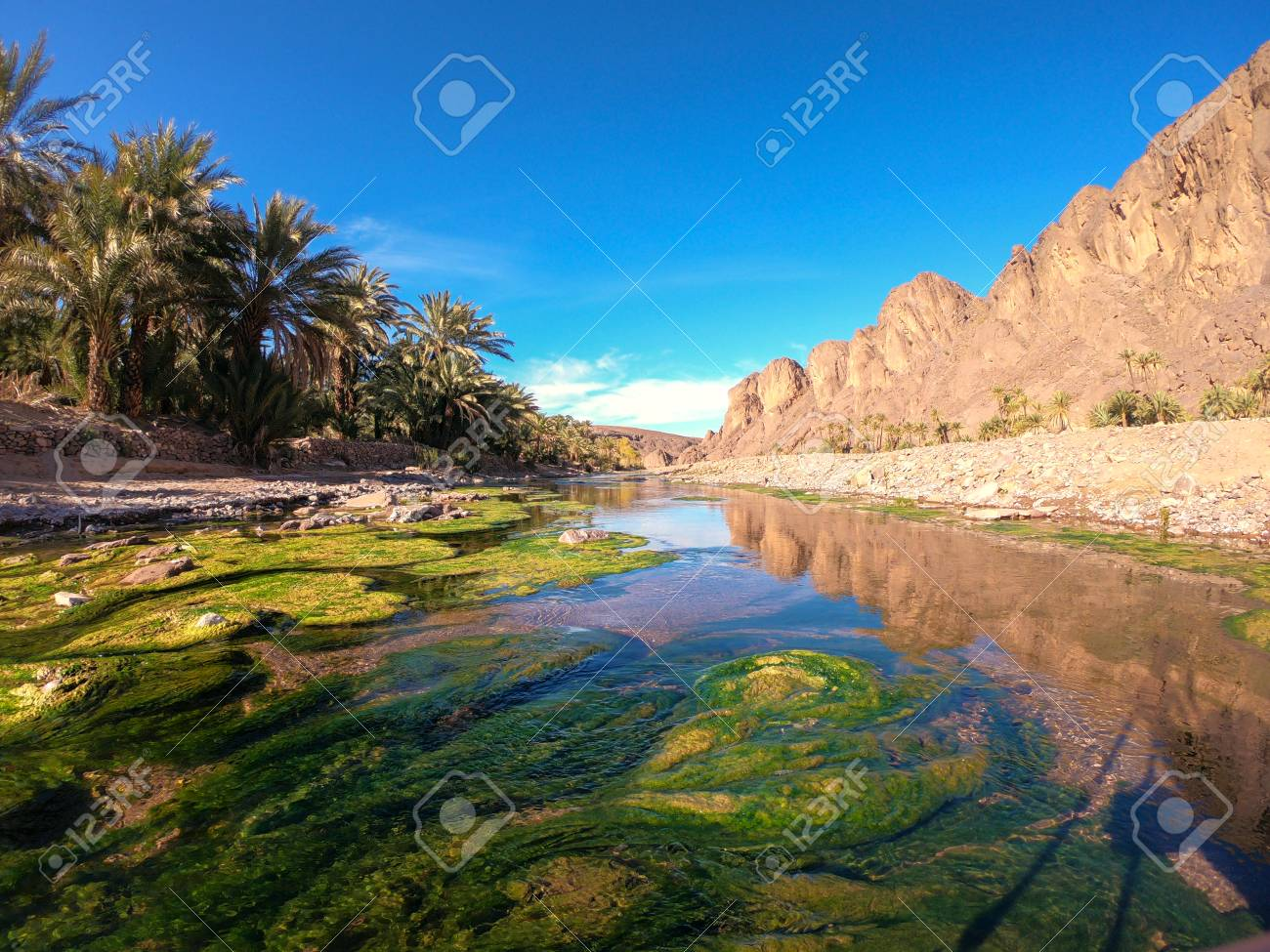 Beautiful Desert oasis landscape in Oasis De Fint near Ourzazate in Morocco, North Africa - 119221460