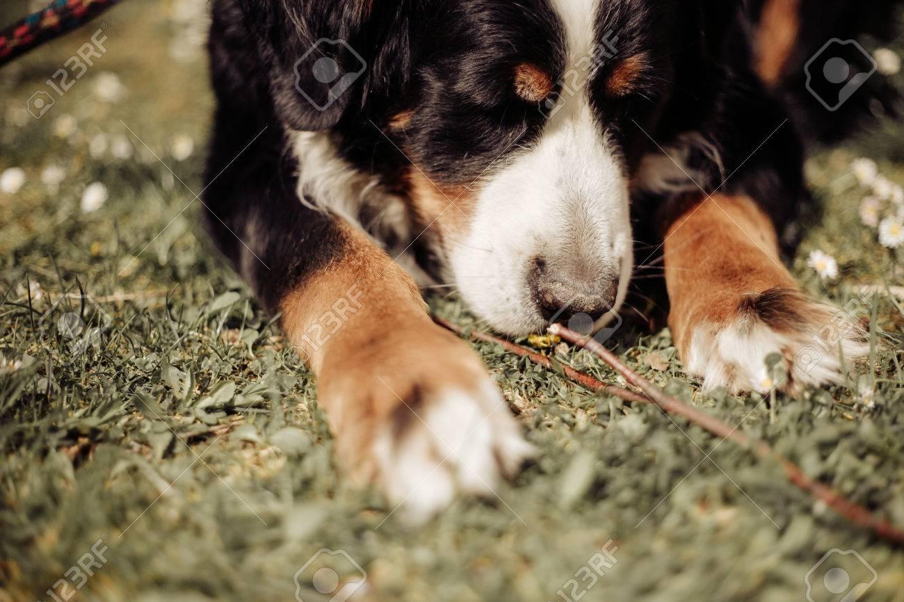 Portrait Of Dog In The Forest Sunshine Vintage