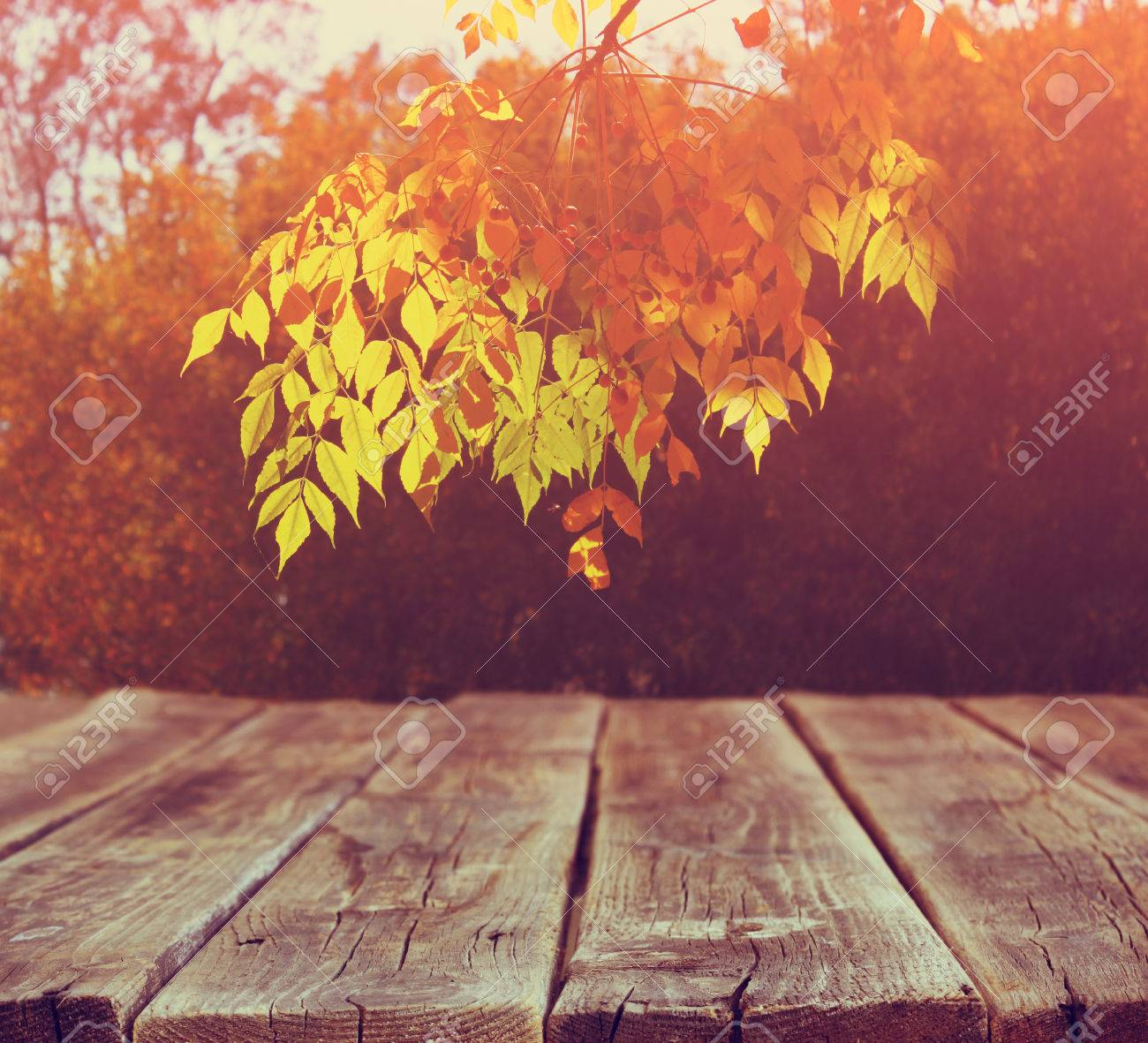 Image Of Front Rustic Wood Boards And Background Fall Leaves Stock Photo