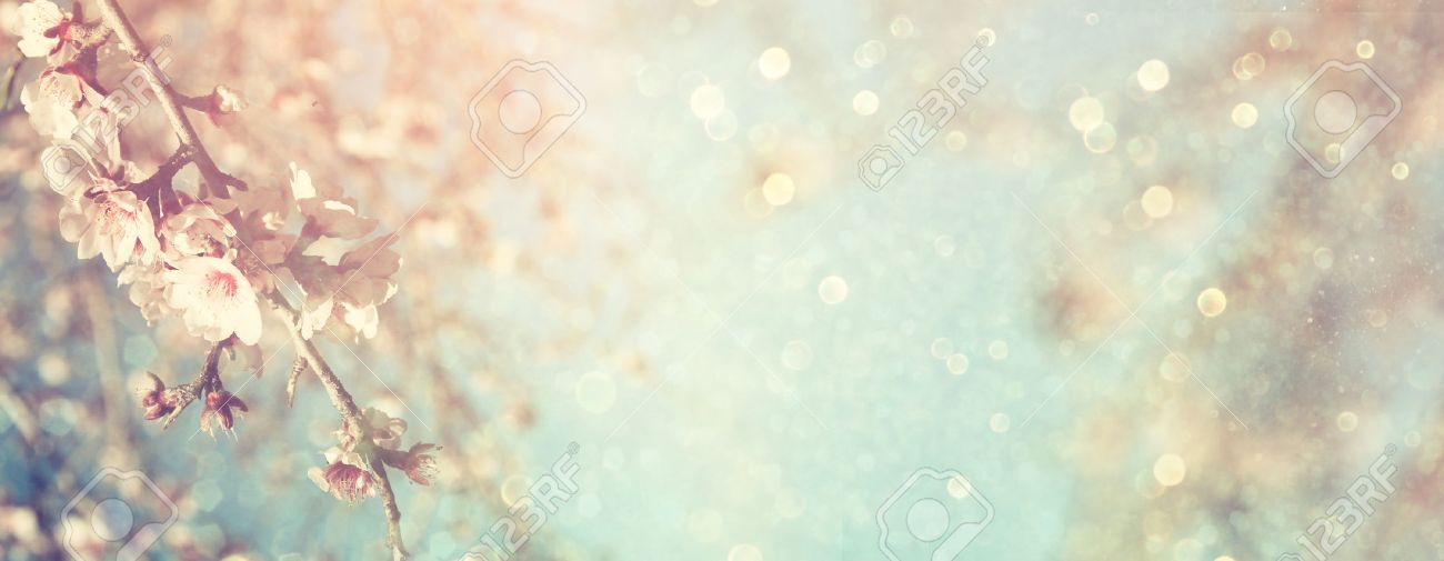 Abstract blurred website banner background of of spring white cherry blossoms tree. selective focus. vintage filtered Stock Photo - 52460749