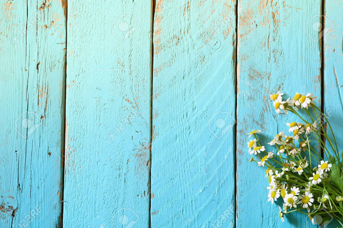 top view image of daisy flowers on blue wooden table. vintage filtered Stock Photo - 52571689