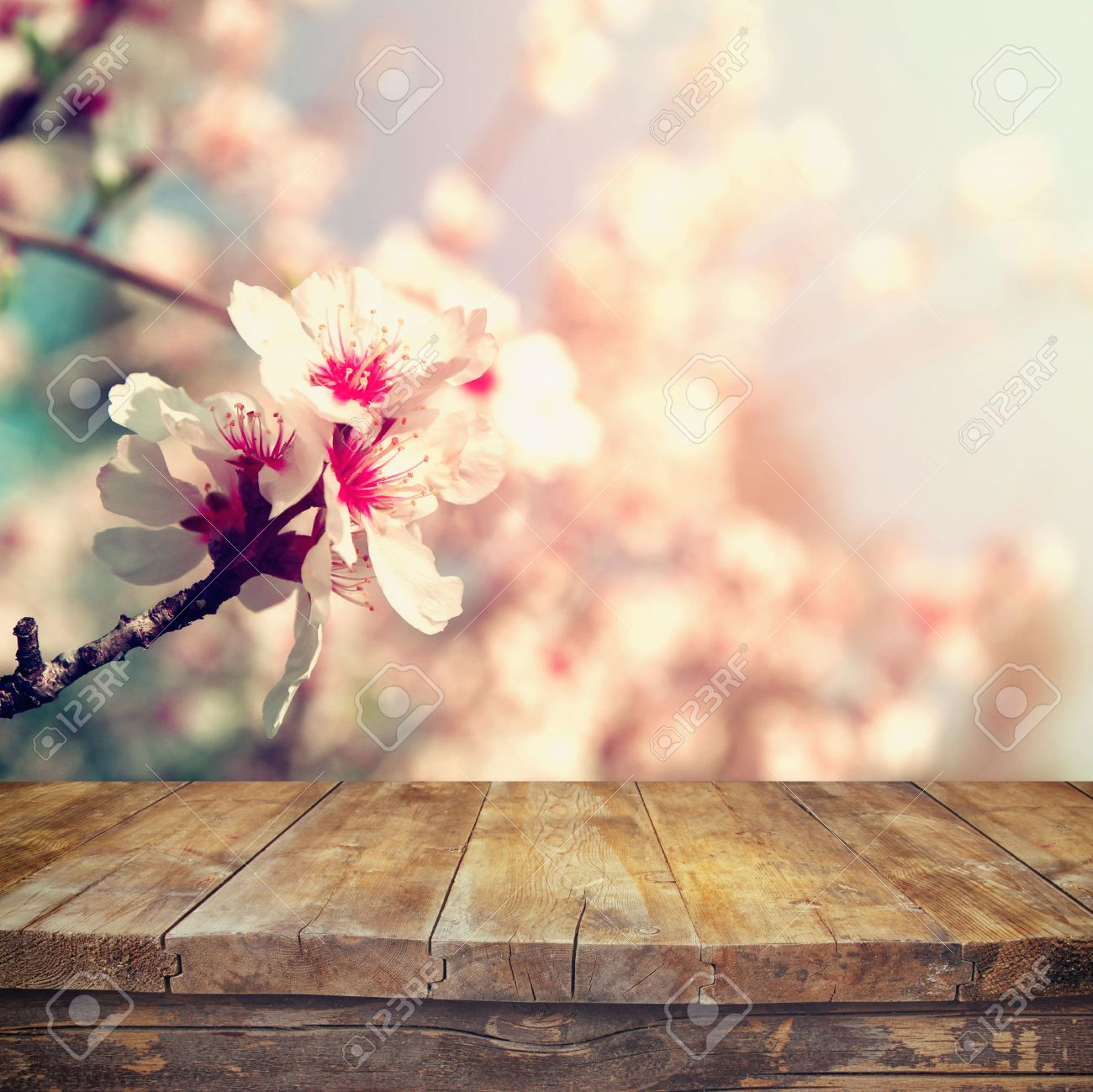 wooden rustic table in front of spring white cherry blossoms tree. vintage filtered image. product display and picnic concept - 52575339