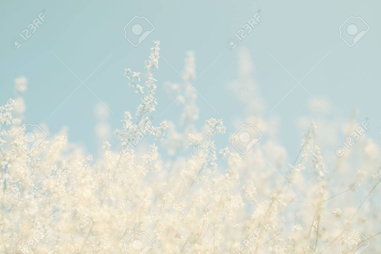 abstract dreamy and blurred image of spring white cherry blossoms tree. selective focus. vintage filtered Stock Photo - 53662765